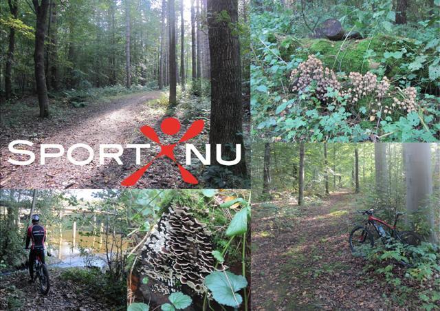 Lekker fietsen door het bos of over Wieringen