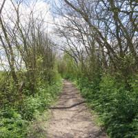 Wandeltocht Het Mooie Landschap